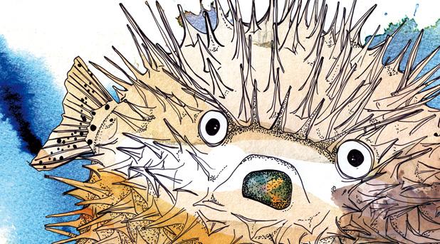 Laura Bustos. Ilustración infantil