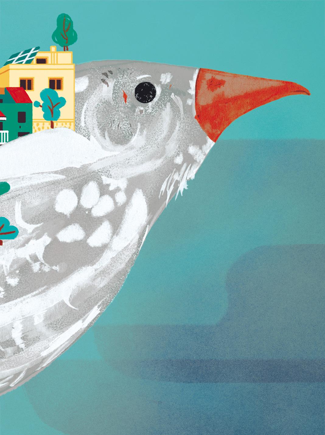 Paloma parte superior, ilustración cartel. Laura Bustos