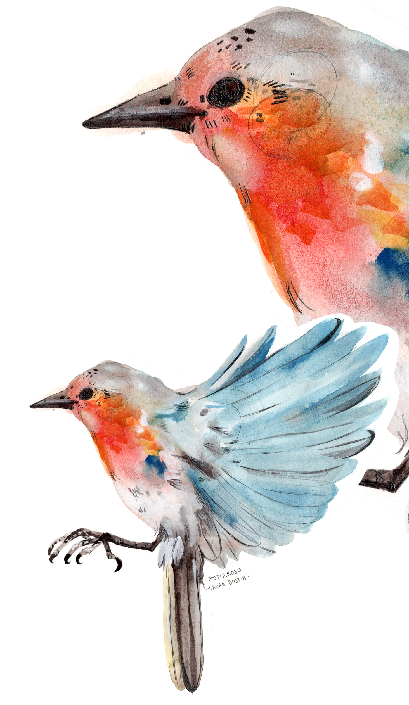 Proyecto personal pájaro Petirrojo, robin realizado en grafito acuarelable